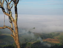 Céu da árvore Imagem de Stock