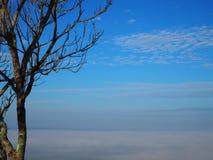 Céu da árvore Fotografia de Stock Royalty Free