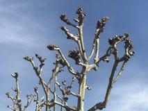 Céu da árvore Foto de Stock