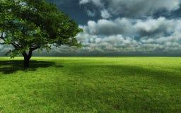 Céu da árvore da natureza Fotografia de Stock Royalty Free