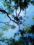 céu da árvore e de azul-céu fotos de stock