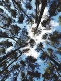 Céu da floresta fotografia de stock royalty free