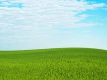 céu da grama fotos de stock