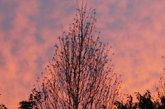 Céu da manhã fotos de stock