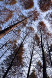 Céu da natureza Fotografia de Stock
