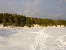 Céu da neve da estrada dos pinhos imagens de stock royalty free