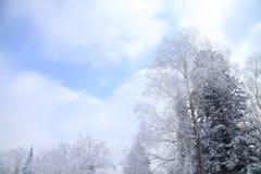 Céu da nuvem e árvore congelada Foto de Stock