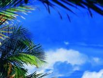 Céu da palmeira Fotos de Stock Royalty Free