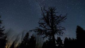 Céu das estrelas com a galáxia da Via Látea que move-se sobre o lapso de tempo inoperante da árvore - noite estrelado do Astropho filme