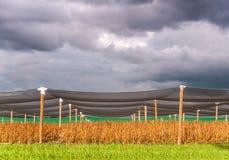Céu de ameaça sobre Flanders do leste imagens de stock