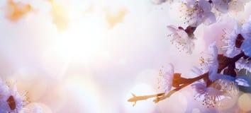 Céu de Art Beautiful Pink Blossoms Against no nascer do sol - flowerBl da mola fotos de stock royalty free