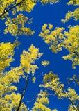 Céu de Aspen Fotografia de Stock Royalty Free