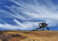 Céu de Big Blue sobre o montanhês de Brown e a única árvore imagem de stock