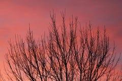 Céu de Chinook Fotos de Stock Royalty Free