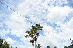 Céu de Indonésia, Pontianak foto de stock