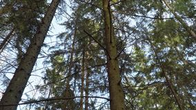 Céu de nivelamento azul da mola na floresta vídeos de arquivo