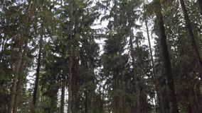 Céu de nivelamento azul da mola na floresta video estoque