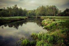 Céu do alvorecer do verde de grama do verão de Bielorrússia Imagem de Stock