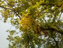 Céu do amarelo da flor da natureza da beleza foto de stock royalty free
