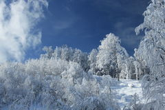 Céu do dia ensolarado Fotos de Stock