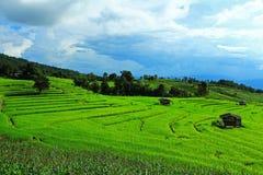 Céu do espaço livre do campo do arroz e de milho Imagens de Stock Royalty Free