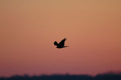 Céu do falcão foto de stock