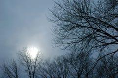 Céu do inverno fotografia de stock royalty free