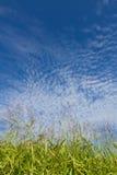 Céu do outono e a grama Imagens de Stock