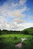 Céu do pantanal Fotografia de Stock