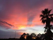 Céu do por do sol com a palma imagens de stock royalty free