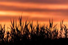 Céu do por do sol e silhueta alaranjados do campo imagens de stock