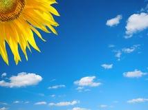 Céu do verão imagens de stock