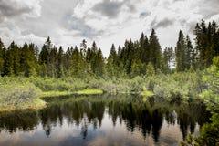 Céu do witk do pântano e do lago em Sumava Foto de Stock Royalty Free