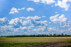 Céu dos azuis celestes com nuvens brancas e campo verde Imagens de Stock Royalty Free
