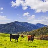 Céu dos touros dos montes 3 do BM Imagens de Stock Royalty Free