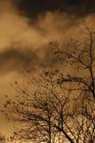 Céu dourado no crepúsculo Imagens de Stock Royalty Free