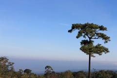 Céu e árvore Foto de Stock