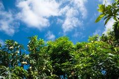 Céu e árvore Foto de Stock Royalty Free