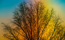 Céu e árvore coloridos Fotos de Stock Royalty Free