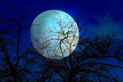 Céu e árvore escuros Fotografia de Stock