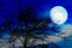 Céu e árvore escuros Imagens de Stock Royalty Free