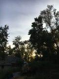 Céu e árvores Fotos de Stock Royalty Free