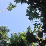 Céu e árvores Fotografia de Stock Royalty Free