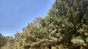 Céu e árvores Foto de Stock Royalty Free