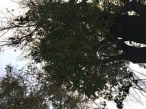 Céu e árvores, perspectiva imagens de stock royalty free