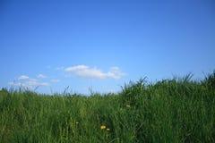 Céu e dentes-de-leão da grama Imagens de Stock Royalty Free