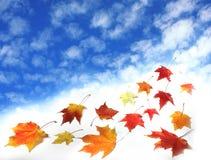 Céu e folhas Imagens de Stock