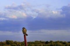 Céu e pássaro Imagens de Stock