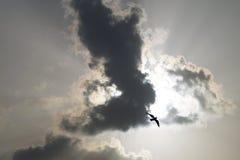 Céu e pássaro Imagens de Stock Royalty Free