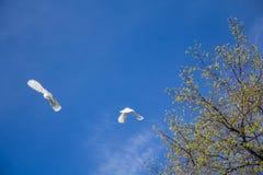 Céu e pombas Imagens de Stock Royalty Free